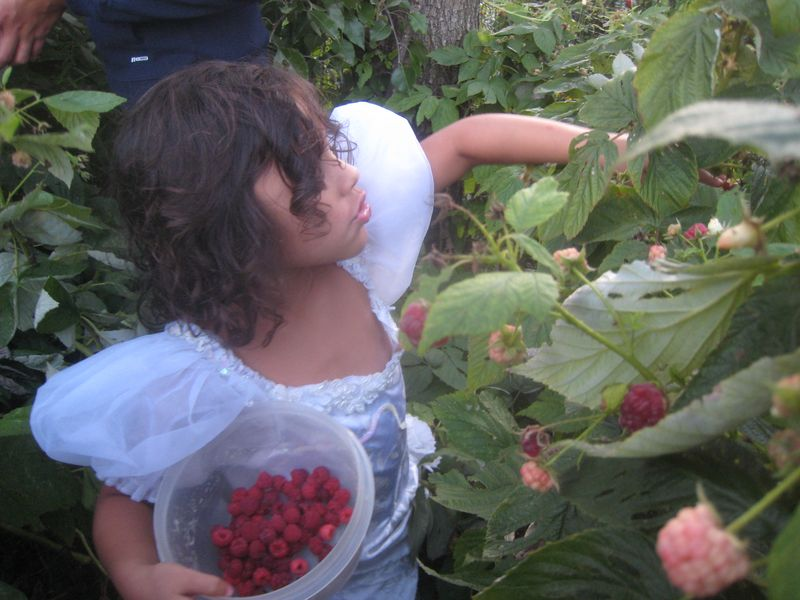 Berry picking 055